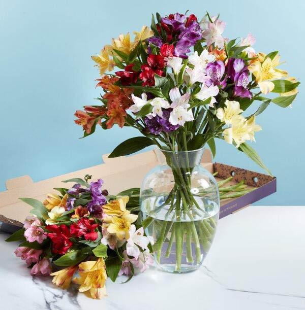 Bright Letterbox Alstroemeria Flowers - £17.99