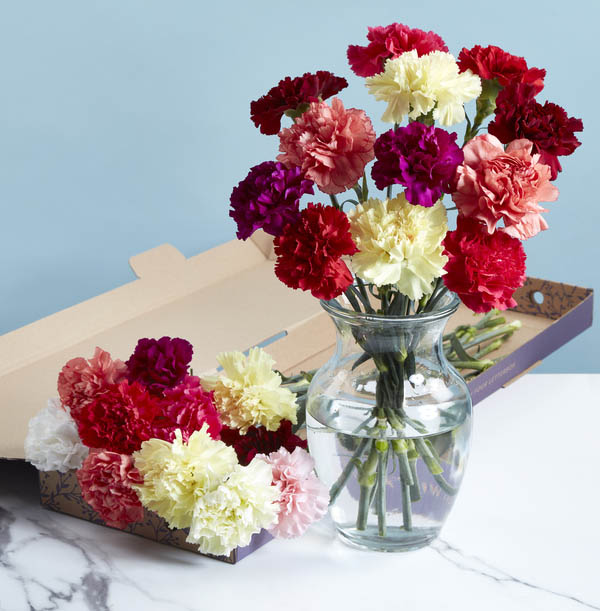 The Bright Letterbox Carnations - £19.99