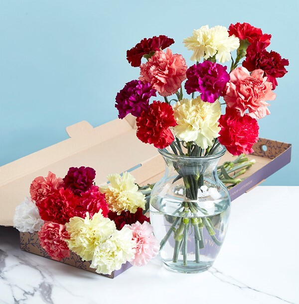The Bright Letterbox Carnations - £17.99