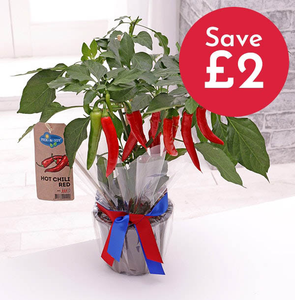 Z DISC 12/19 The Chilli Plant - Was £29.99 Now £27.99