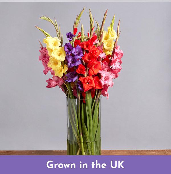 British Gladioli Bouquet - £20.99