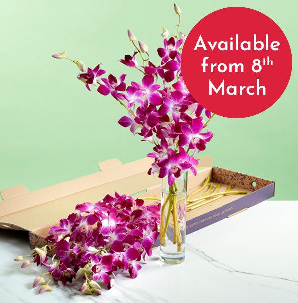 The Letterbox Pink Dendrobium Orchids - £22.99