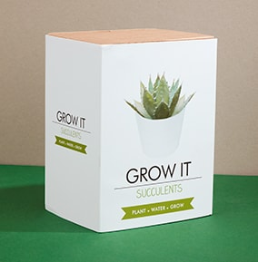Succulents Grow It Kit