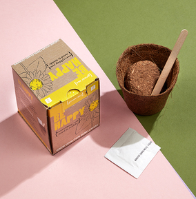 Be Happy - Sunflower Grow Kit