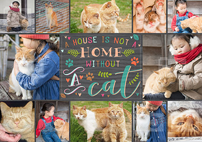 Not A Home Without A Cat Photo Poster