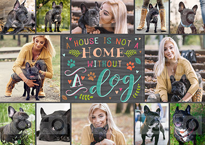 Not A Home Without A Dog Photo Poster